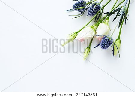 Prairie Gentian and Sea Holly Flowers on white paper background (for invitations or greeting cards)