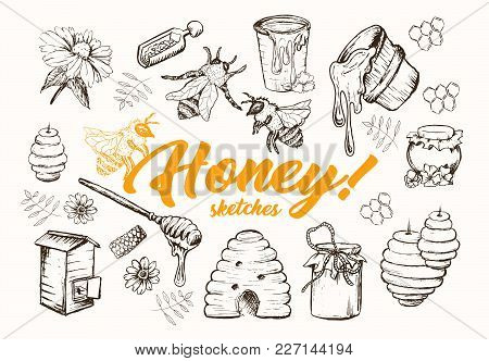Honey Sketches Set, Bee Hive, Honey Jar, Barrel, Pot, Spoon And Flower Hand Drawn Superfood Organic