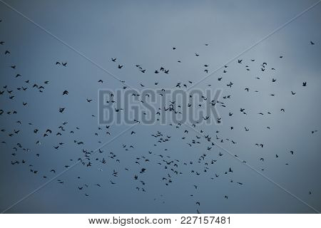 Autumn Grey Sky. Bad Weather, Dramatic View, Depression, Gothic Style, Mystery Concept. Flock Of Bir