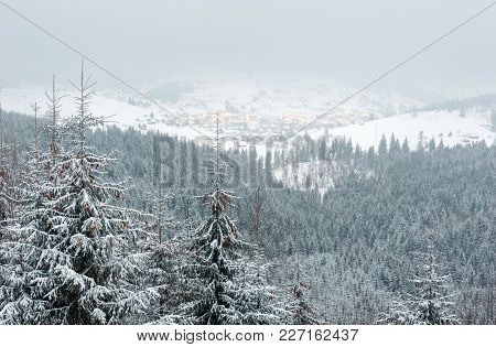 Early Morning Twilight Winter Mountain Landscape With Frosting Fir Forest And Ski Sport Bukovel Reso