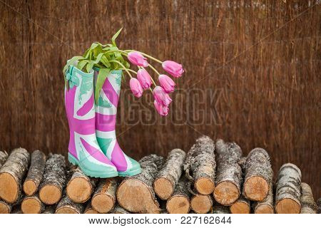 Rain Boots With Fresh Tulips On Firewood Stack Background. Seasonal Spring Concept.