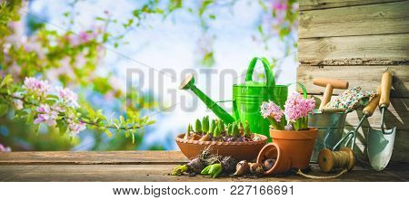 Gardening tools and spring flowers on the terrace in the garden