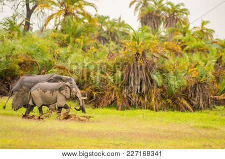 Lonely Elephant In A Palm Oasis In Amboseli Park In Kenya