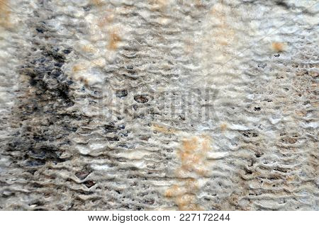 White Wet Calcified Stone Texture Caused By Mineral Deposits In Water