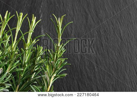 Growing Fresh Rosemary Branches In Front Of The Black Rock Background
