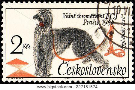 Czechoslovakia - Circa 1965: A Postage Stamp, Printed In Czechoslovakia, Shows A Afghan Hound