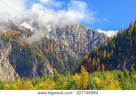 Foliage Shows Different Color When Season Changes