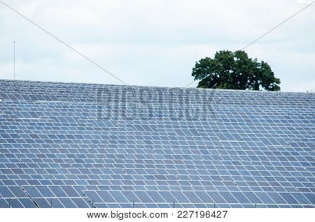 Field With Lot Of Photovoltaic Panels - Reneable Energy