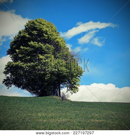 Isolated Tree In The Middle Of The Meadow With Vintage Effect