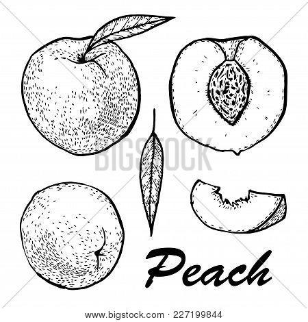 Manual Drawing Of Peach Ink. Set Whole Peach And Slices. Botanical Food Illustration.