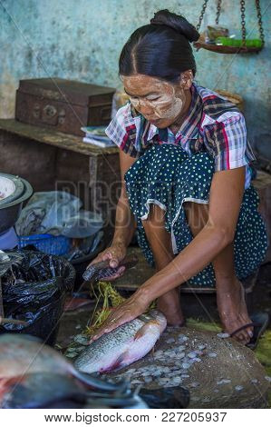 Shan State , Myanmar - Sep 06 : Burmese Woman Selling Fishes In A Market In Shan State Myanmar On Se