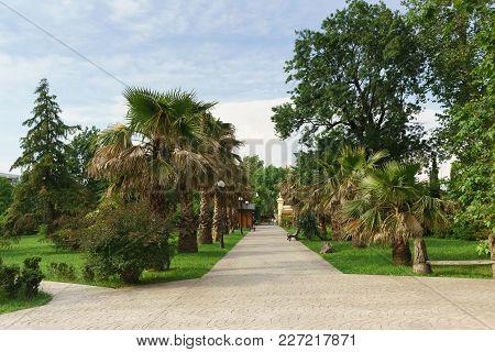 Russia, Sochi, Krasnodar Region-june 06.2017: Pedestrian Road In The Arboretum Of The Spa Town. Sunn