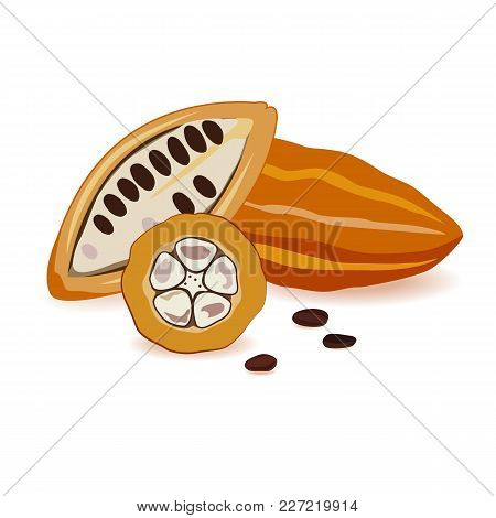 Cocoa Beans In Different Angles. Vector Illustration. Ripe Cocoa Pods Ready To Craft