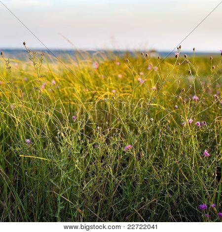 Dune Grass And Wildflowers