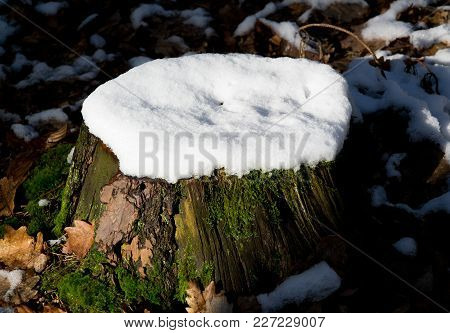 Tree Stump With Snow In The Midday Sun