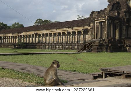 Monkey Sitting In Front Od Angkor Wat Temple In Cambodia