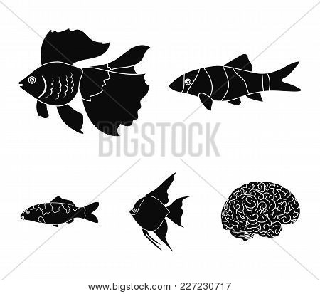 Discus, Gold, Carp, Koi, Scleropages, Fotmosus.fish Set Collection Icons In Black Style Vector Symbo