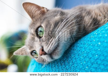 Beautiful Gray Cat With Green Eyes For Any Purpose