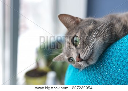 Beautiful Gray Cat With Green Eyes, Near The Window For Any Purpose