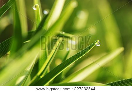 Fresh Summer Grass With Dew Drops Close Up