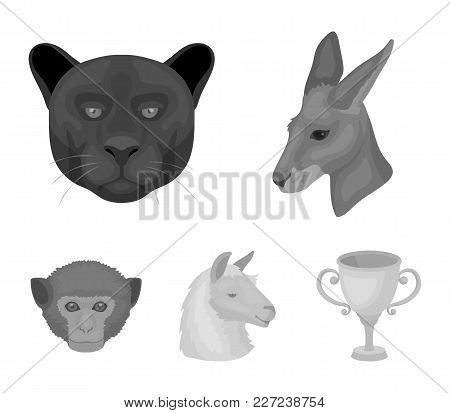Kangaroos, Llama, Monkey, Panther, Realistic Animals Set Collection Icons In Monochrome Style Vector