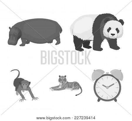 Bamboo Bear, Hippopotamus, Wild Animal Tiger, Monkey . Wild Animal Set Collection Icons In Monochrom