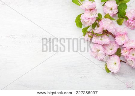 Branch of blossom  Almond (Prunus triloba)  on   white  wooden table.