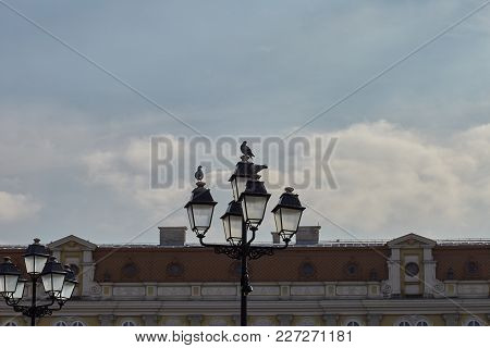 Two Birds Sitting On A Light Post