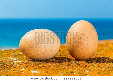 Two Chicken Eggs Lying On Orange Lichens With Blue Sea