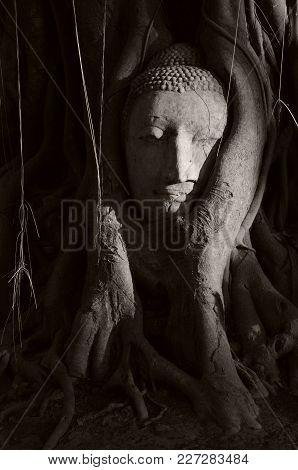 Historic Buddha Head Of Ayutthaya, Thailand. Black & White Image With High Contrast. Unesco World He