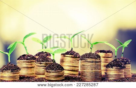 Plants Soil Coins Green Background Money Business
