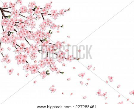 Sakura. A Lush Cherry Branch With Pink Flowers In The Wind Loses Petals. Isolated On A Pink Backgrou