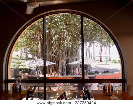 Townsville, Queensland, Australia-december 13, 2017:  The View Of A Banyan Tree Looking Through A Re