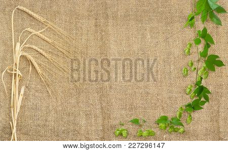 Background Of The Burlap Made Of Natural Coarse Unpainted Spinning Fibers From Hemp With Barley Stem