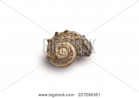 Seashell On A White Background For Isolation