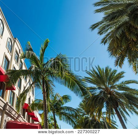 Palm Trees In Beverly Hills. Los Angeles, California