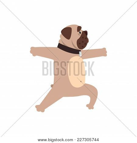 French Bulldog Working Out Yoga Excercise, Funny Dog Practicing Yoga Cartoon Vector Illustration Iso