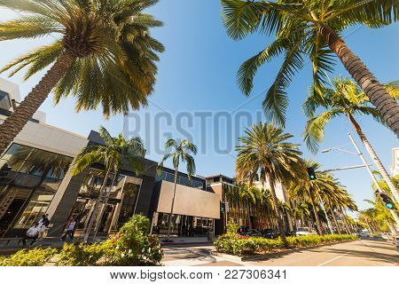 Palm Trees In Rodeo Drive, Beverly Hills. Los Angeles, California