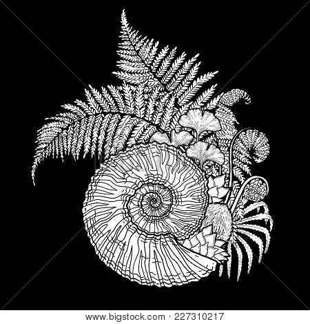 Graphic Prehistoric Seashell With Fern Branches Growing Out From It. Vector Natural Illustration Dra