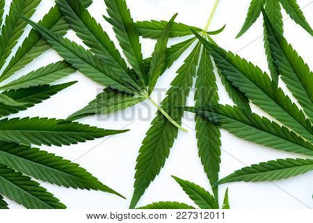 Many Natural Fresh Big And Small Cannabis Five Fingers Leaves Lay In Chaotic. Cannabis Marijuana Lea