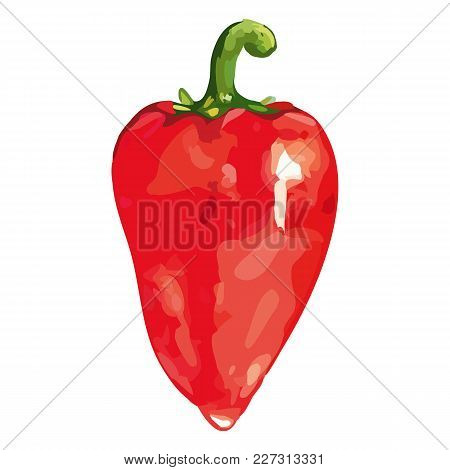 Watercolor Red Sweet Bell Bulgarian Pepper Vegetable Isolated Vector