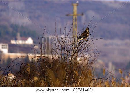 A Big Bird, Eagle In Natural Environment