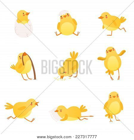 Set Of Funny Yellow Chicken In Various Situations. Cartoon Character Of Little Farm Bird. Flat Desig