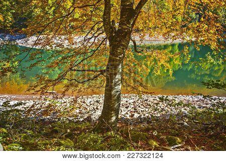 Biogradsko Lake View Through Autumn Branches, Montenegro
