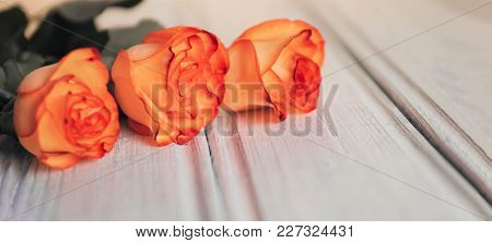 Beautiful Orange Roses With Copy Space On White Wood
