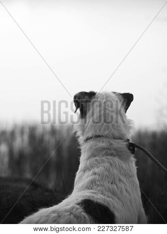 Cute Parson Russell Terrier Dog Who Just Wants To Play!