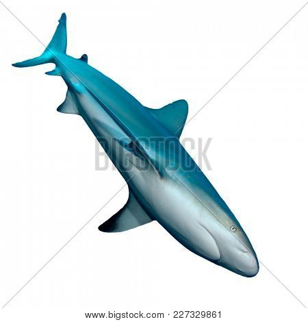 Shark cutout. Grey Reef Shark isolated on white background