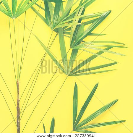 Variations Tropical Palm Leaves Yellow Flat Lay