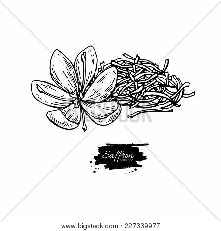 Saffron Flower And Dried Heap Vector Drawing. Hand Drawn Herb And Food Spice. Engraved Vintage Flavo