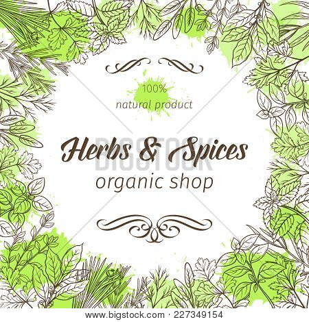Poster Frame Template With Hand Drawn Sketch Herbs And Spices For Farmers Market Menu Design. Vector